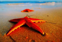 L'eau de mer : quand la nature vous offre le meilleur pour votre Santé !