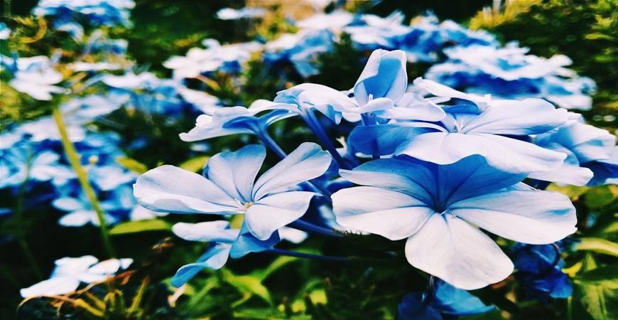 Cette Fleur est vraiment magique...