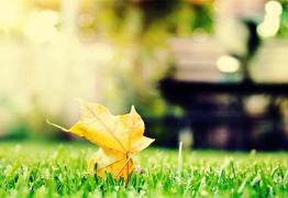 Votre cure automnale pour un hiver tranquille : Préparez vos défenses immunitaires
