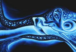 Acouphènes : Origines-Physiopathologie