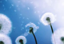 Allergies. Quelques conseils vraiment efficaces pour s'en débarrasser naturellement ?
